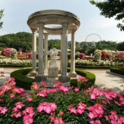 Everland-rose-garden
