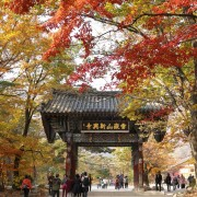 Sinheungsa-Temple-autumn-buddha-fall-leaves-entrance