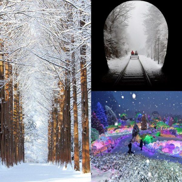 nami-island-ganchon-rail-park-garden-of-morning-calm-winter