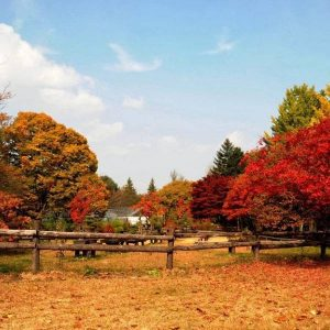 nami-island-fall-tree-red-leaves_square