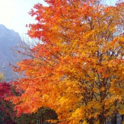 seoraksan-fall-leaves-mt-seorak-tree