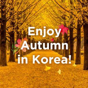 koreatraveleasy_fall-foliage-tour-banner_thumbnail