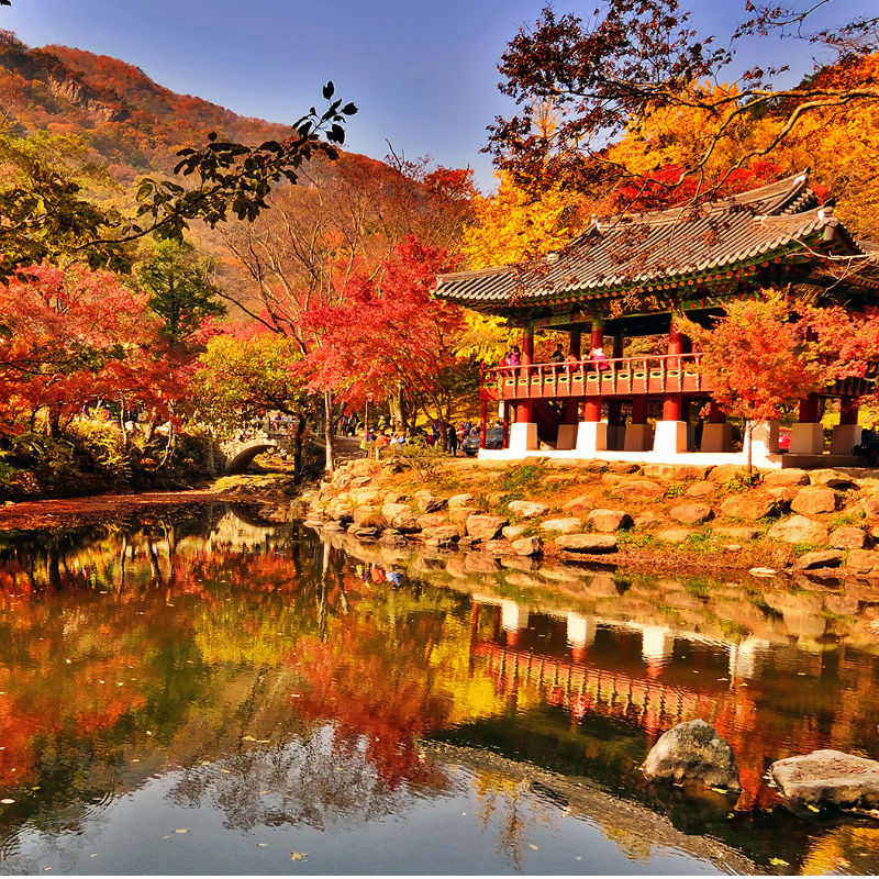 UP TO 44%, Korea Fall Foliage Naejangsan Autumn Leaves 1-Day Shuttle Package Tour | KoreaTravelEasy