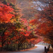 naejangsan-fall-foliage-autumn-lake-on-side-of-road-trees-red-leaves