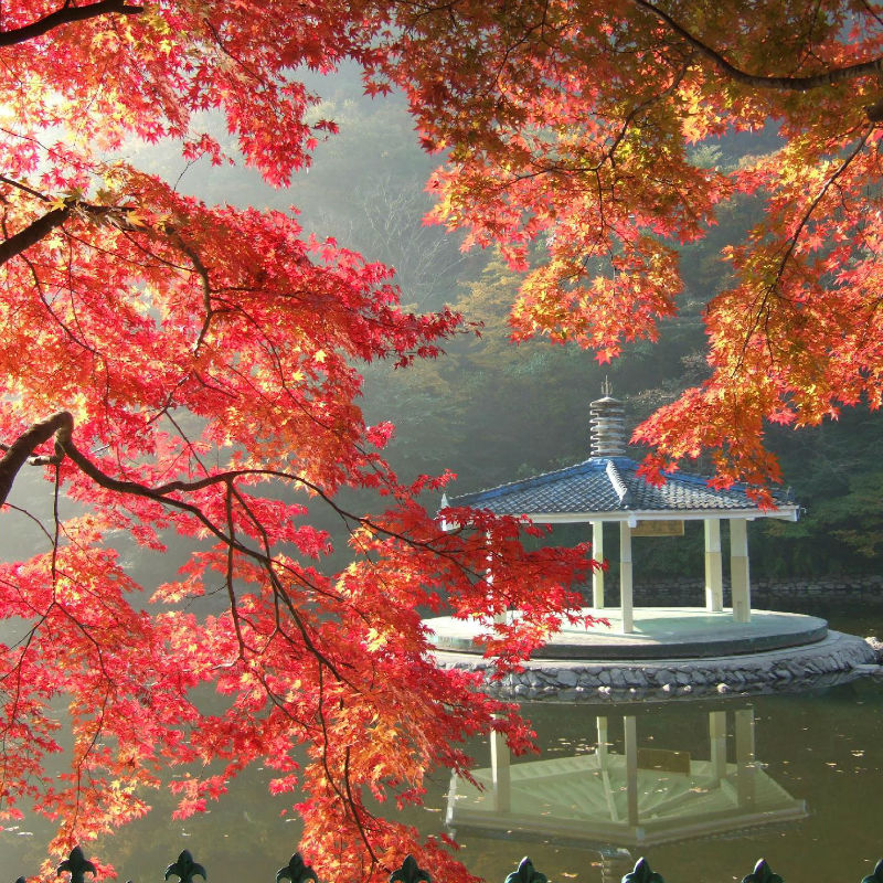naejangsan-fall-foliage-autumn-lake