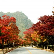 naejangsan-fall-foliage-autumn-road