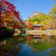 naejansan-autumn-red-leaves-change-colours-fall-foliage-baeyangsa