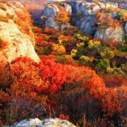 naejansan-autumn-red-leaves-change-colours-foll-foliage-view-from-top