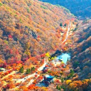 naejansan-autumn-red-leaves-change-colours-full-mountain-view-fall-foliage