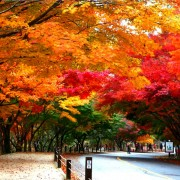 naejansan-autumn-red-leaves-change-colours-road