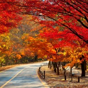 naejansan-autumn-red-leaves-change-colours-road-curvy-full-of-trees