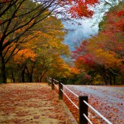 naejansan-autumn-red-leaves-fall-foliage-leaves