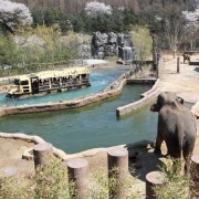 everland-safari-world-3