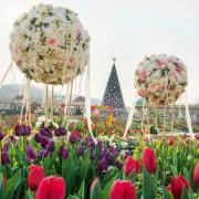 everland-tulip-garden-2