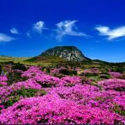 jeju_island_mountain_spring