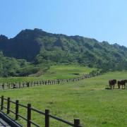 path-horses-jeju-island