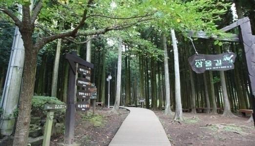 02-jeju-east-jeolmul-forest-park