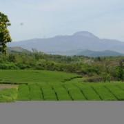 08-jeju-west-o-sulloc-green-tea-museum-and-farm2