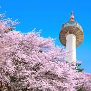 koreatraveleasy-spring-namsan