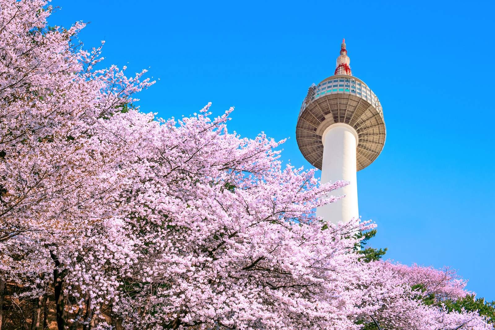 Don't miss Korea Spring tour