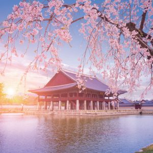 Seoul-group-tour-join-spring