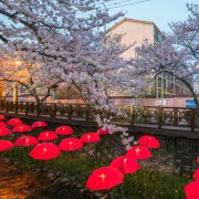 jinhae-cherry-blossom-festival-Korea-flower-umbrella-street