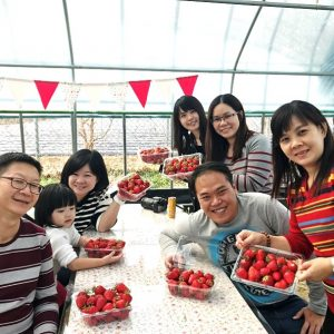koreatraveleasy-strawberry-farm-all