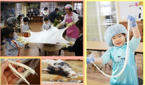 Jeonju-animal-farm-cheese-making-feed-sheep-fun-things