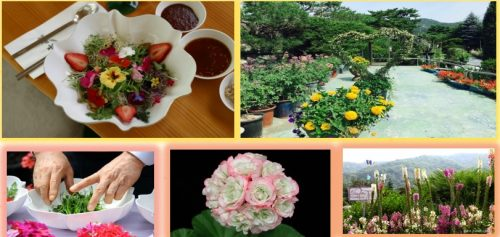 Jeonju-hanok-tour-rice-lunch-flower-bibimbap
