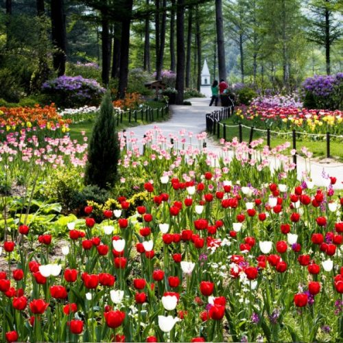 koreatraveleasy-garden-of-morning-calm-walkway