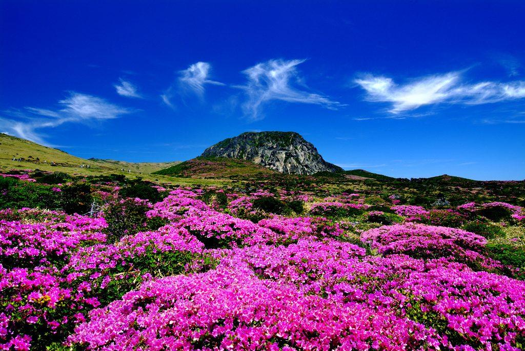 Jeju-Island-Hallasan-Pink