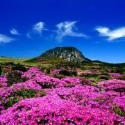 Jeju-Island-Hallasan-Spring
