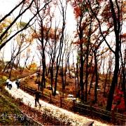 Korea-Fall-Foliage-Random-tour-Seoul-Gyeonggi-Namsan