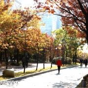 Korea-Fall-Foliage-Random-tour-Seoul-Gyeonggi-Yeouido-park