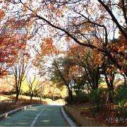 Korea-Fall-Foliage-Random-tour-Seoul-Gyeonggi-yeouido-parks