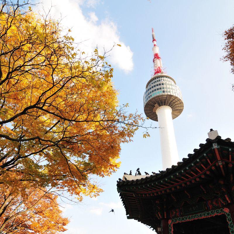 UP TO 50%, Korea Fall Autumn Foliage Day Tour Around Seoul | KoreaTravelEasy