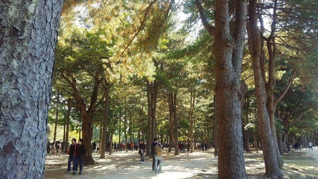 nami island fall tree 5