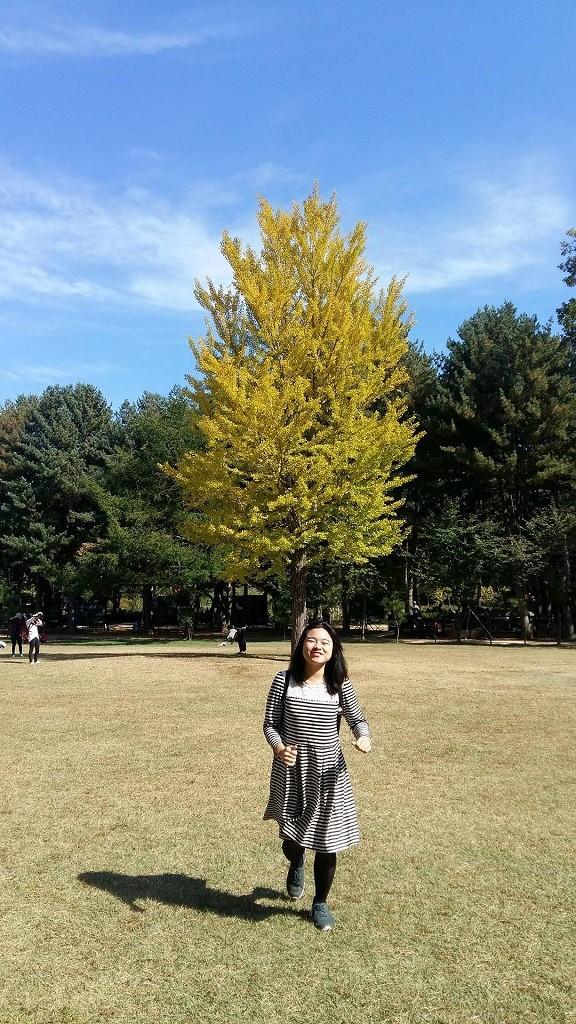 nami island fall tree 3