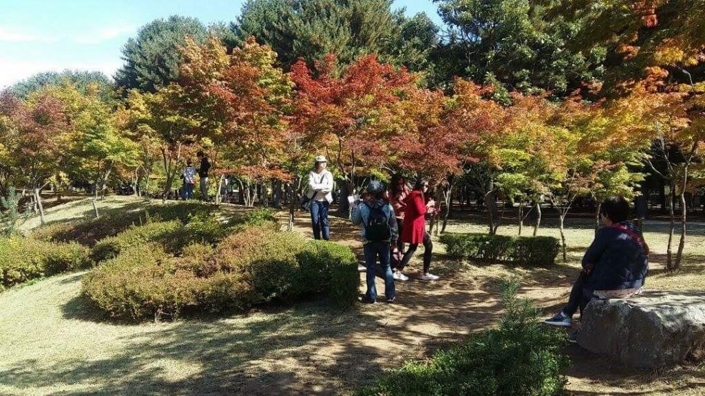 nami island fall tree 1