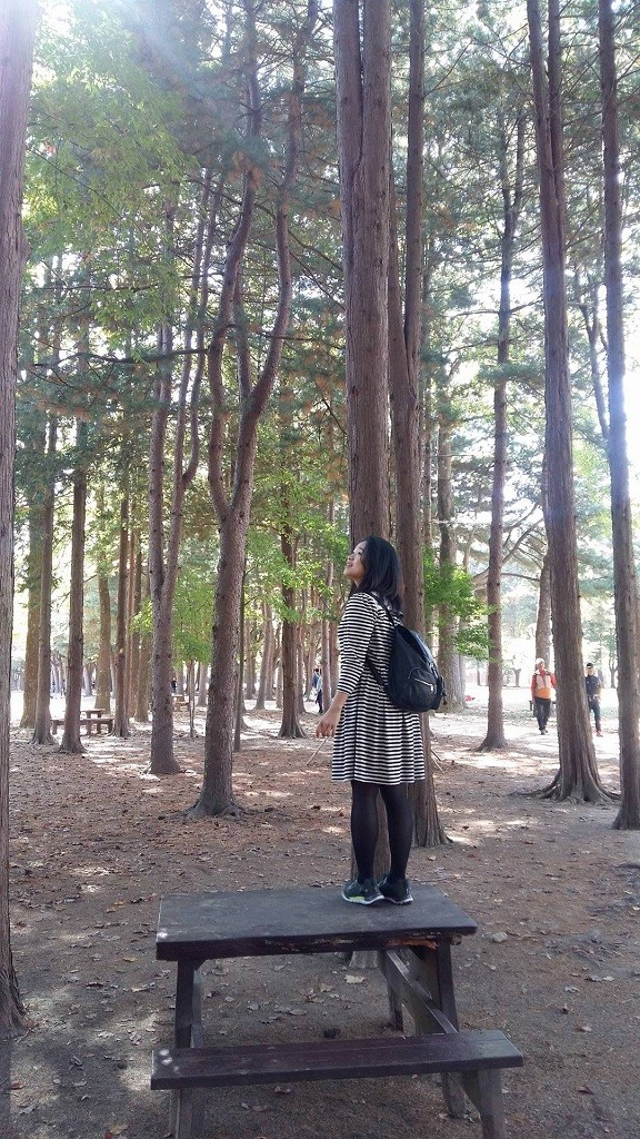 nami island fall tree 2
