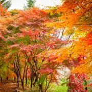 Gayasan_Mountain_Autumn