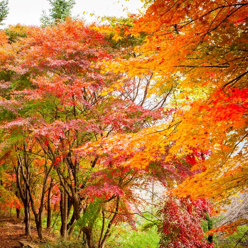 Gayasan_Mountain_Autumn