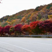 Jirisan-mountain-fall-Foliage-on-load