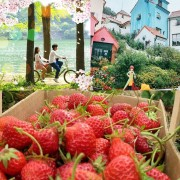strawberry-farm-nami-island-petite-france-spring