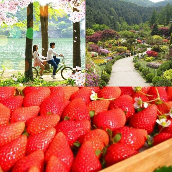 strawberry-farm-nami-island-garden-of-morning-calm-spring