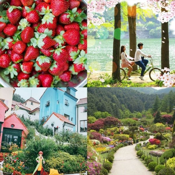 strawberry-farm-nami-island-petite-france-garden-of-morning-calm-spring