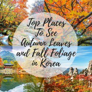 Autumn Fall Foliage Korea