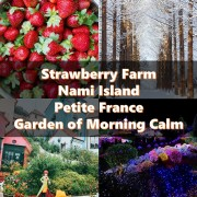 strawberry farm nami island petite france garden of morning calm title