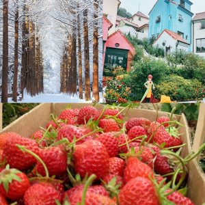 strawberry farm nami island petite france