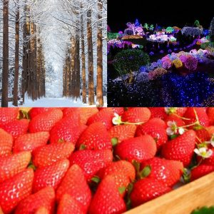 strawberry farm nami island garden of morning calm
